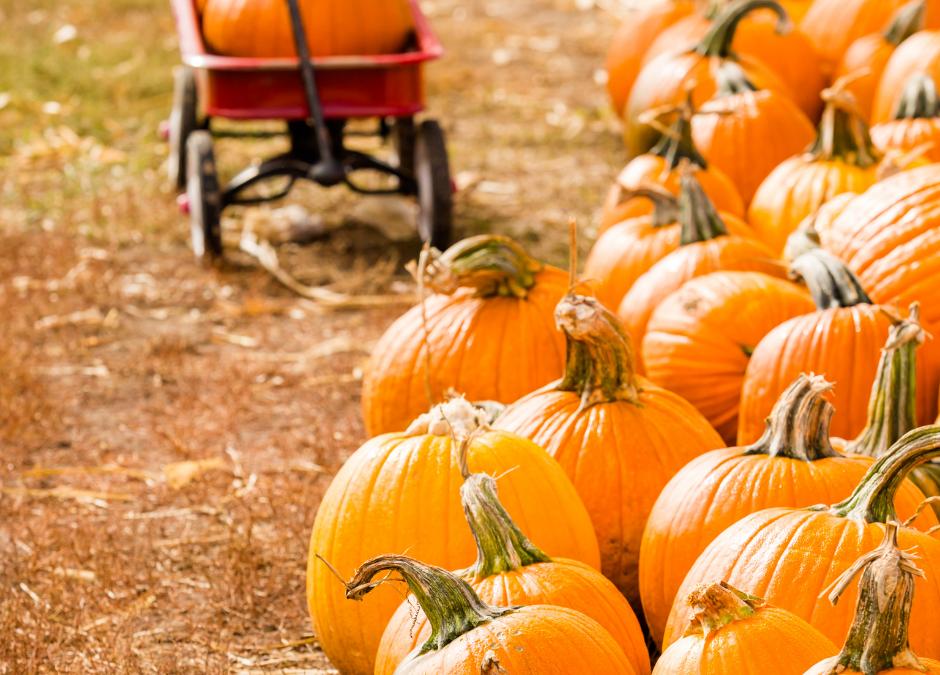 Northern Michigan U-Pick Pumpkin Farms